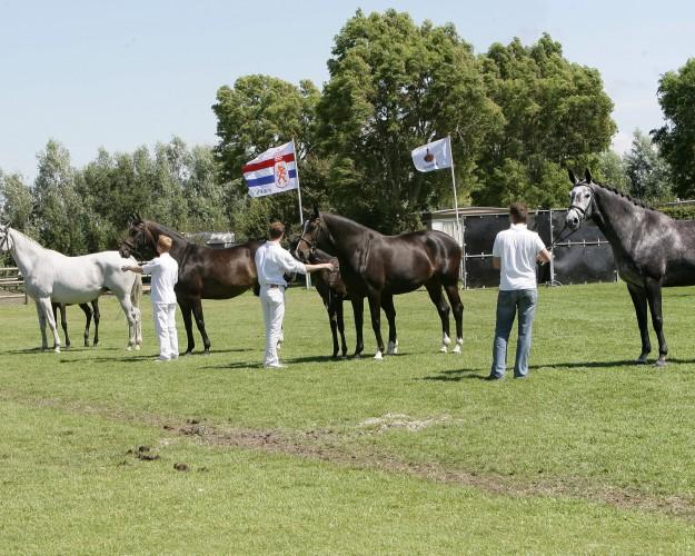 groep Murona 1 - 2007